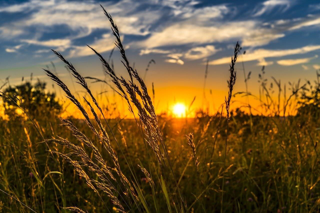 Summer Sunset Meadow Nature  - FelixMittermeier / Pixabay